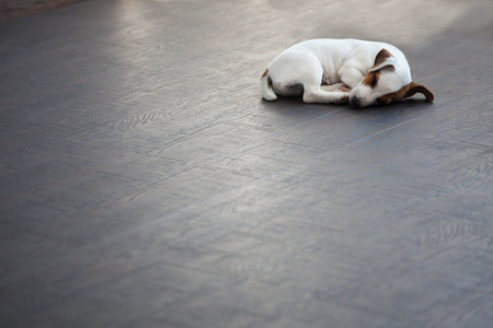 Puppy sleeping at warm floor. Dog Banque d'images
