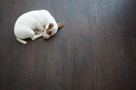 Puppy sleeping at warm floor. Dog Standard-Bild