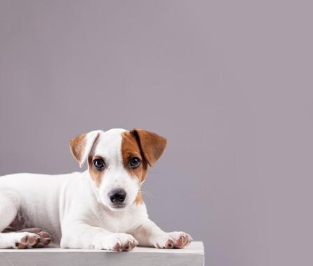 Puppy at home. Dog studio shot