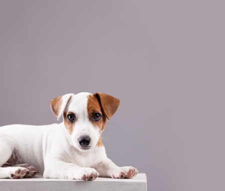 Puppy at home. Dog studio shot
