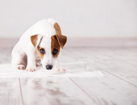 吸収性のくずの子犬。トイレに犬を慣らします。トレーニングのペット