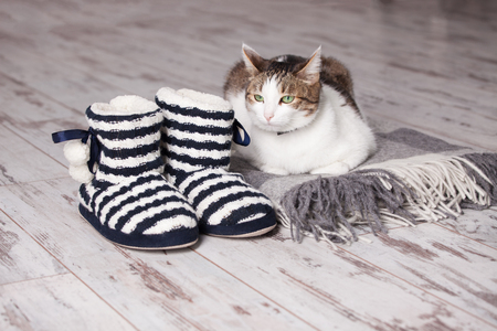 slipper: Warm slippers, rug and cat on the background old white floor. Homeliness.