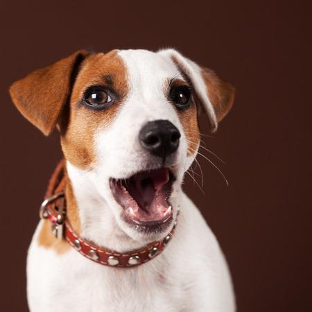 놀란 개. 개가 열린 강아지