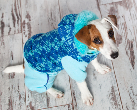 overalls: Dog in winter clothes. Puppy in overalls Stock Photo