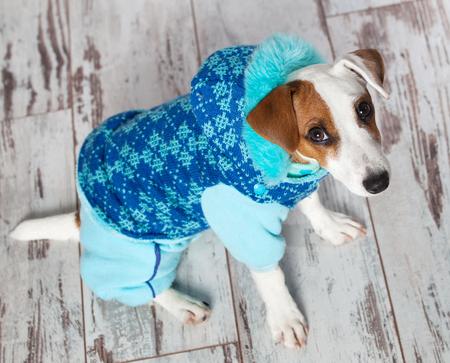 overol: Perro en ropa de invierno. Cachorro con un mono
