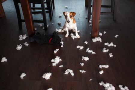 Verwennerij honden. Naughty puppy. kattenkwaad Stockfoto