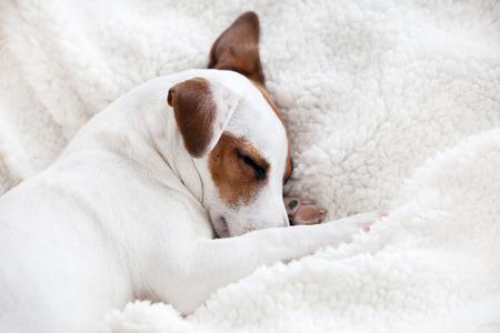 개는 부드러운 흰색 담요에 잠자는