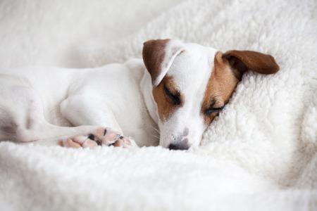 Hond slapen op een zachte witte deken