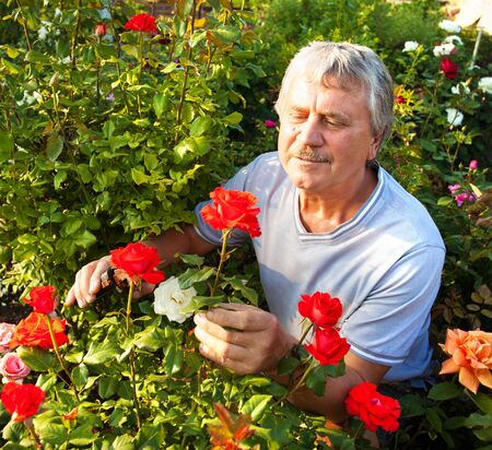 mature man: Mature man caring for roses in the garden Stock Photo