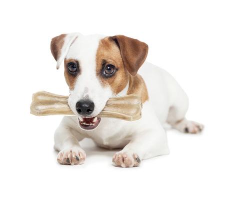 Puppy with bone. dog chewing on a bone Standard-Bild
