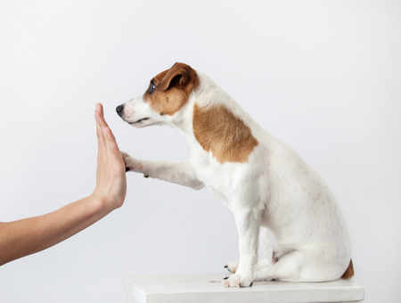 Dog greeting and human. Training puppy. Friendship