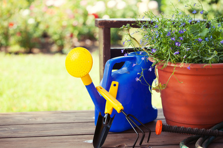 land plant: Garden accessories. Watering can, shovel, rake for gardening