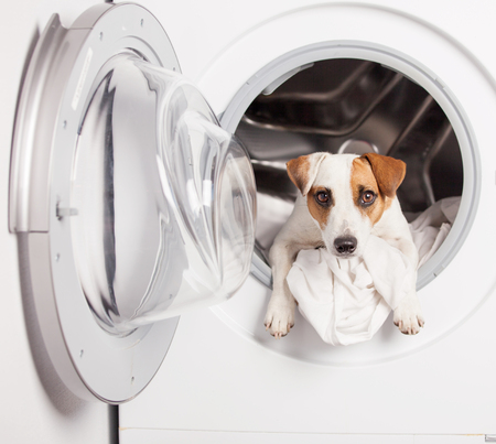 Fun dog in washer at home