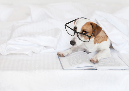 dog school: Dog with book at home. Fun pet in bed. Stock Photo