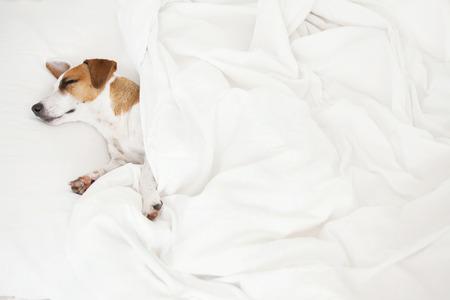 ベッドでは、犬を眠っています。自宅でペット