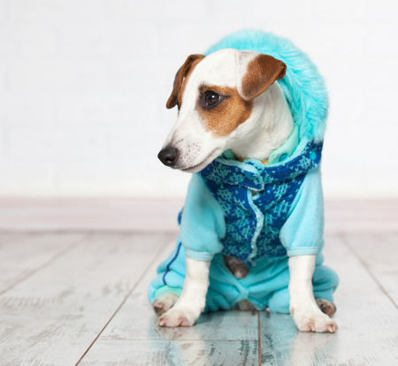 Dog in winter clothes. Puppy in overalls Stock Photo