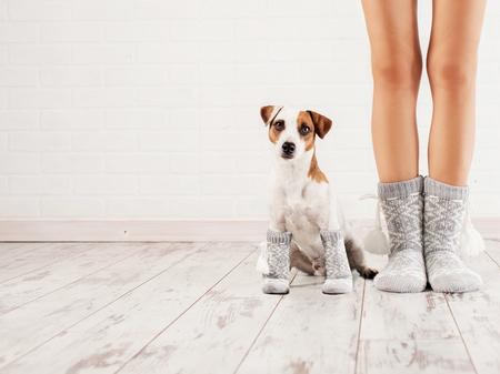 Mujer y perro en calcetines. casa de la familia ropa de abrigo