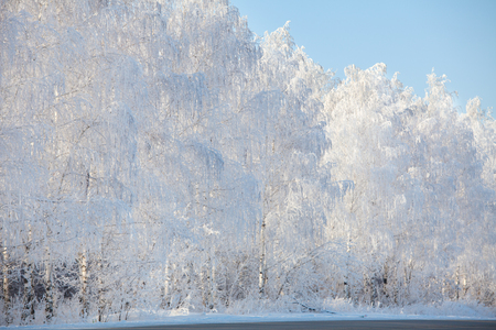 snow  snowy: Snowy winter forest. Trees in the snow Stock Photo