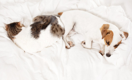 Sleeping dog and cat at bed. Pets at home Reklamní fotografie