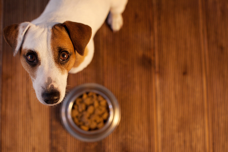 Pet eating food. Dog eats food from bowl 스톡 콘텐츠