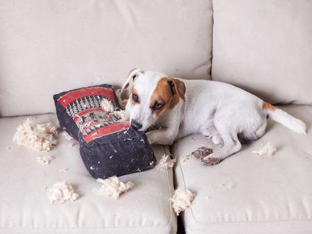 Verwennerij hond. Stoute puppy. kattenkwaad