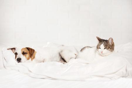 Slapen huisdieren op bed. Kat en hond Stockfoto
