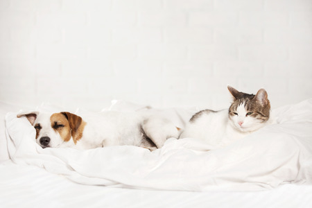 Sleeping pets on bed. Cat and dog Фото со стока - 73412028