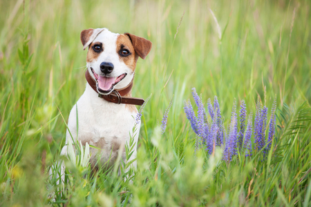 Happy dog outdoors. Pets sitting in green grass