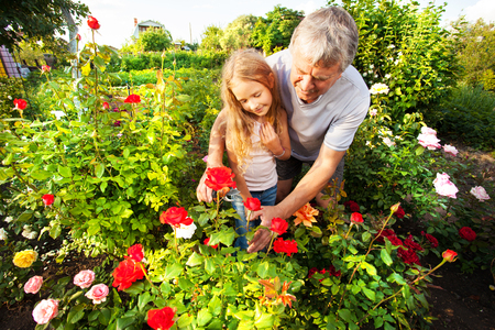 Mature man with child caring for roses in the garden Stock Photo