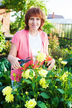 Woman in the garden cares for flowers. Female with dahlias photo