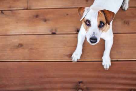 Dog at on wooden floor. Copy space. Pet Standard-Bild