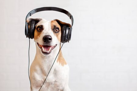 Dog in headphones listening to music. Happy pet 스톡 콘텐츠