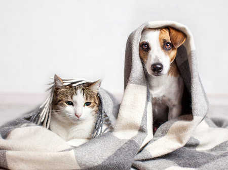 Dog and cat under a plaid. Pet warms under a blanket in cold autumn weather Reklamní fotografie - 87340407