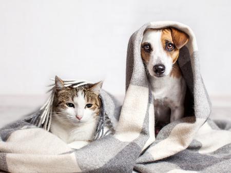 Hond en kat onder een plaid. Het huisdier warmt onder een deken in koud de herfstweer op Stockfoto