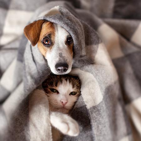 개와 고양이 격자 무늬에서. 차가운 가을 날씨에 담요 아래에 애완 동물이 따뜻해집니다. 스톡 콘텐츠