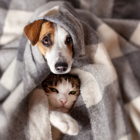 Perro y gato debajo de una tela escocesa. Mascota se calienta debajo de una manta en el frío clima de otoño