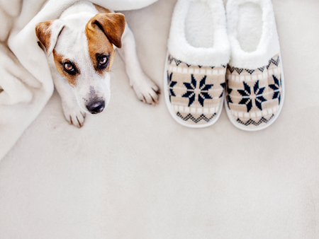 Dog near to slippers under the rug. Soft and cozy home accessories Reklamní fotografie