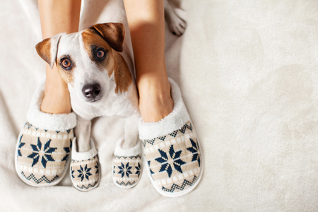 Female and dog in slippers. Warm clothing family home