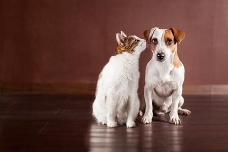 Cão e gato em casa. Animais de estimação da amizade Foto de archivo