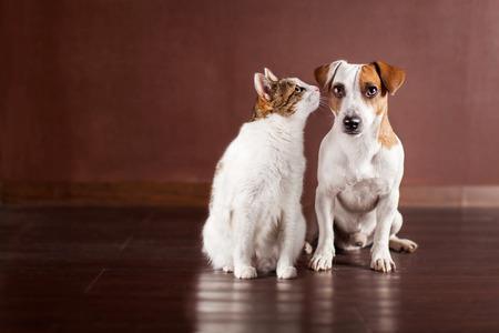 Dog and cat at home. Friendship pets Standard-Bild