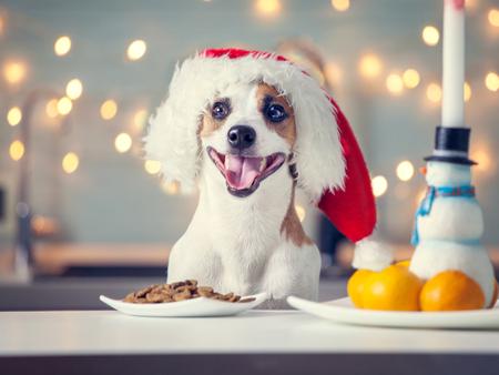 Dog in christmas hat eating food. Happy pet santa