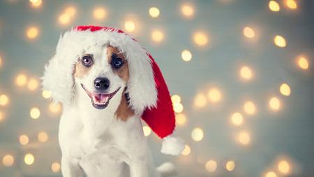 Dog in christmas hat. Happy pet santa