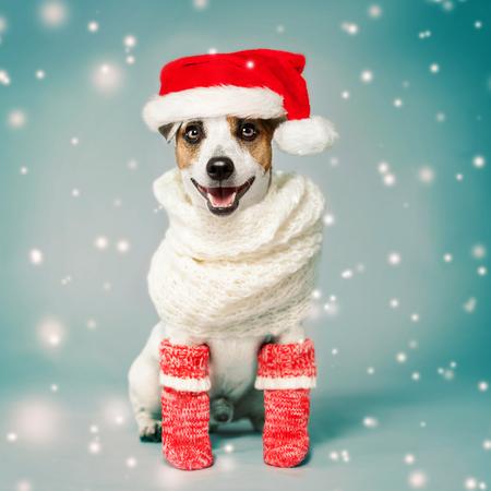 Happy dog in christmas hat. Pet jack russell. Studio Shot