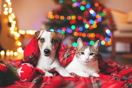 Cat and dog under a christmas tree. Pets under plaid