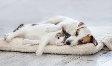 Cat and dog sleeping. Pets sleeping embracing Archivio Fotografico