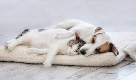 Cat and dog sleeping. Pets sleeping embracing Standard-Bild