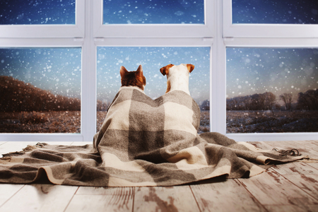 Dog and cat under a plaid looking out the window. Pets sitting with their backs 免版税图像 - 93407241