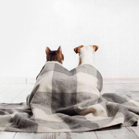 Hond en kat onder een plaid. Huisdieren zitten met hun rug Stockfoto