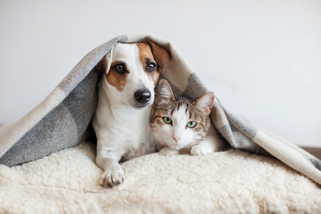 Dog and cat together. Dog hugs a cat under the rug at home. Friendship of pets Stock fotó - 97550370