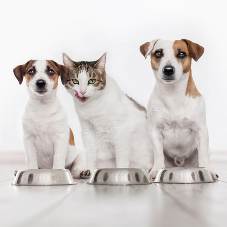 Dog and cat eating food. Puppy eating dogs food